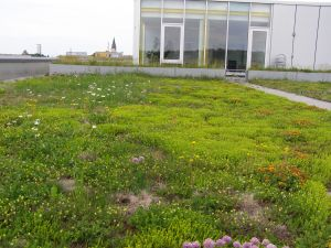 One of the green roofs in Germany where I will be working in 2013.