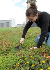 I've collected small samples of the soil on the green roofs.
