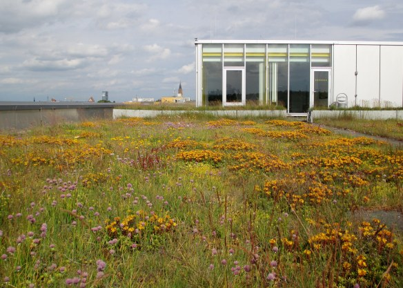 A lot of different plant species grow on this green roof in Neubrandenburg.