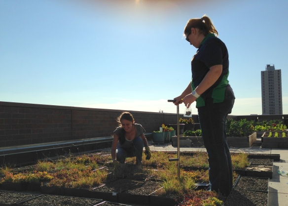 Undergraduate interns at Loyola University help with soil and temperature data collection on the green roofs.