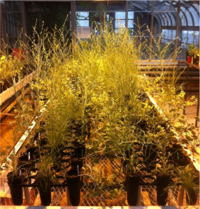 Experimental plants.