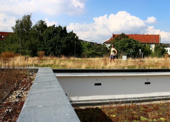Collecting insects again on the green roofs in Berlin, Germany