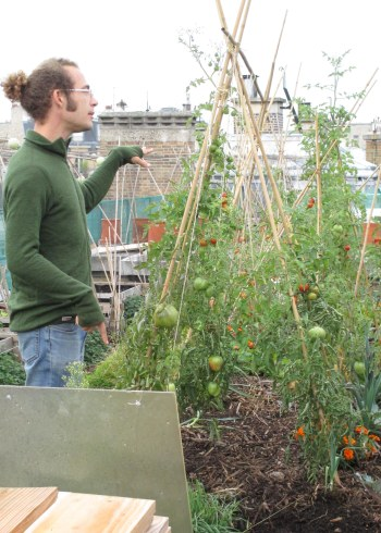 A man explains how they grow delicious tomatoes on green roofs in France.
