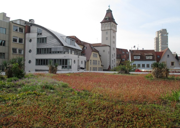 "A green roof in Stuttgart, Germany uses different depths of soil-like ""growing media"" to create different habitats for a variety of plant species."