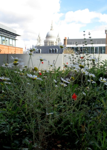 A green roof in London uses a creative pattern of different soil-like growing media to create habitat for a wide variety of plant species