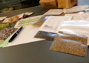I ordered wildflower and wild grass seeds from several companies. When they arrived I needed to sort them and determine how many of each type I would need for my new experiment.