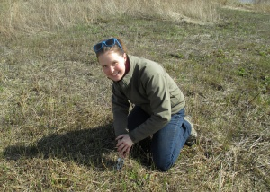 I collected soil from a local prairie restoration to include in the experimental green roof trays.