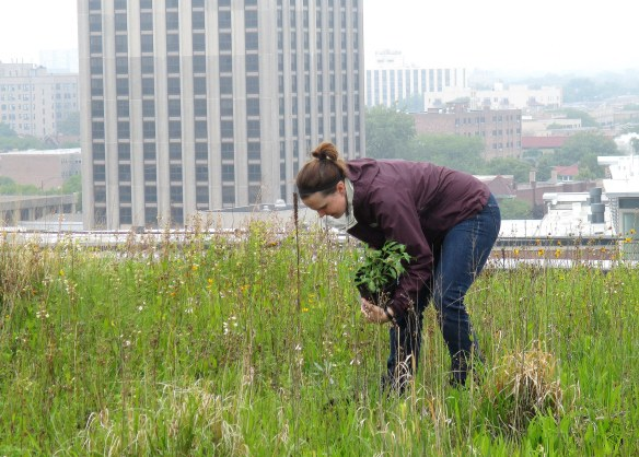 I set up the potted plants on top of the green roofs on a rainy day in June.