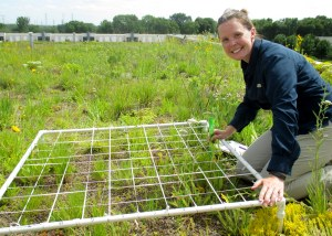 Each month, I use my grid to locate the plants to be measured on the green roofs.