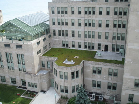 My potted plants are visible among the rest of the green roof vegetation on this building, as seen from another green roof. Will the pollinators also see flowers on both roofs and move pollen between them? I'm trying to find out.