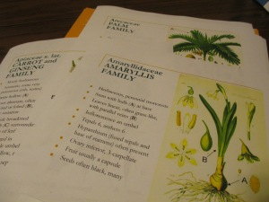 I am getting handouts ready to teach a class about plants and their importance to people for the Fall 2014 semester.